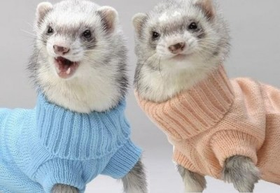 4 Ways Chasing A Ferret Will Make You A Better Designer